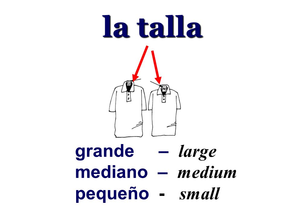 la talla grande – large mediano – medium pequeño - small