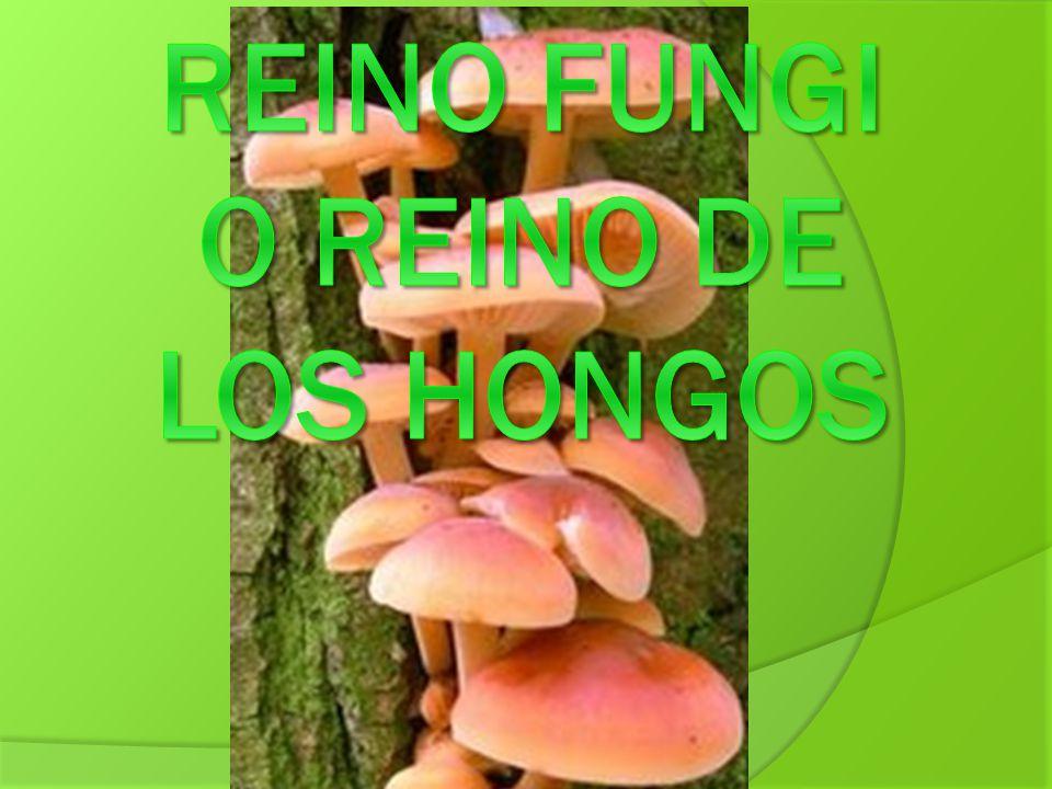 Reino fungi o reino de los hongos