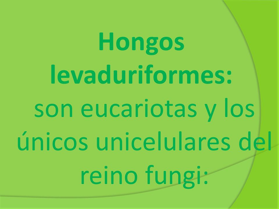 Hongos levaduriformes: