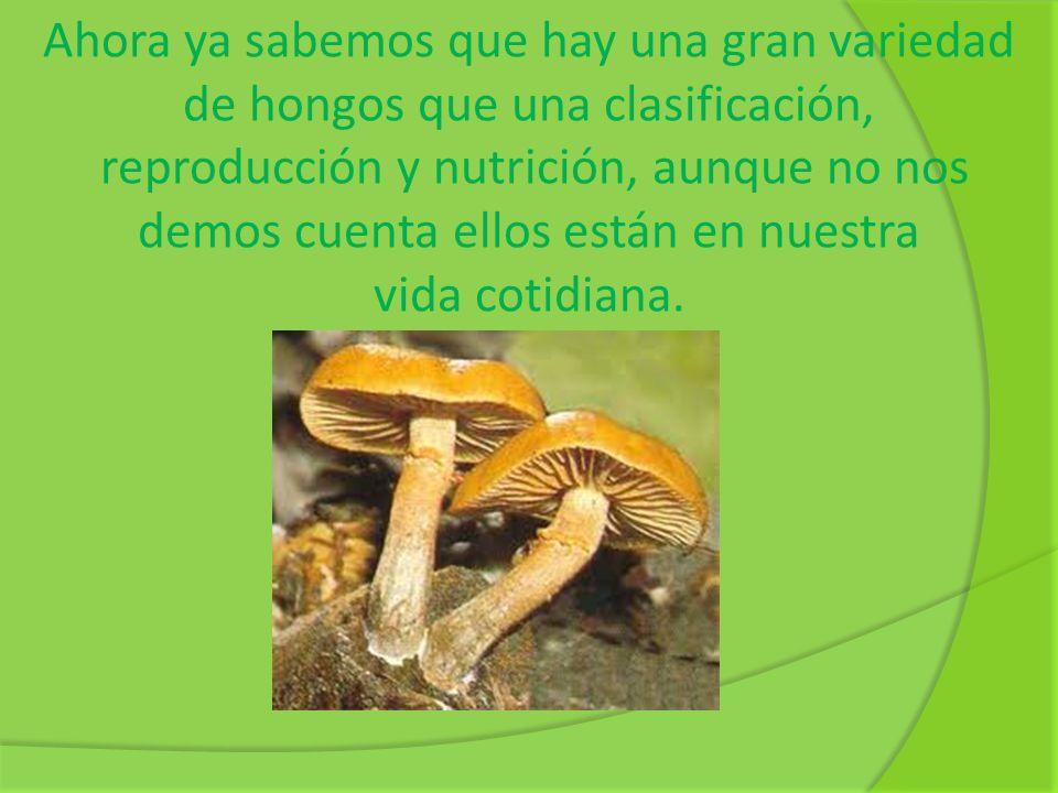 Ahora ya sabemos que hay una gran variedad de hongos que una clasificación,