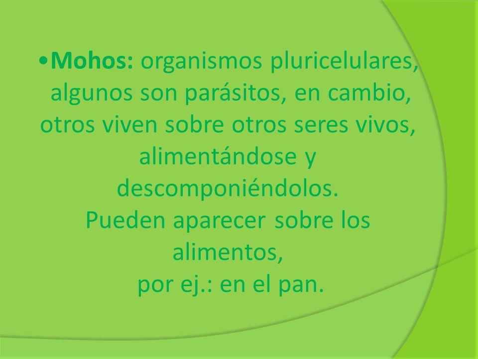 Mohos: organismos pluricelulares, algunos son parásitos, en cambio,