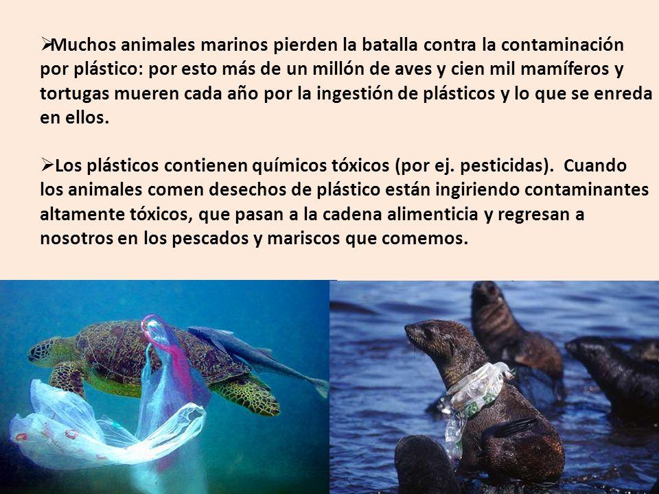 Muchos animales marinos pierden la batalla contra la contaminación por plástico: por esto más de un millón de aves y cien mil mamíferos y tortugas mueren cada año por la ingestión de plásticos y lo que se enreda en ellos.