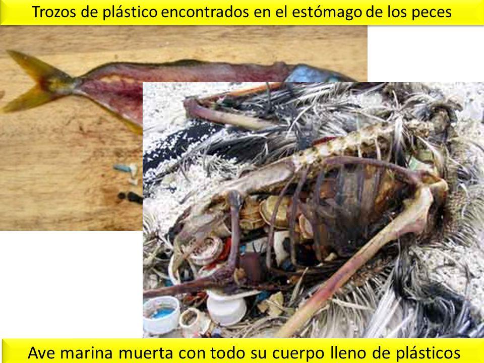 Ave marina muerta con todo su cuerpo lleno de plásticos