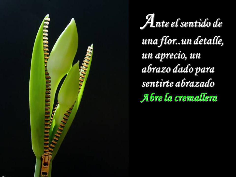 Ante el sentido de una flor