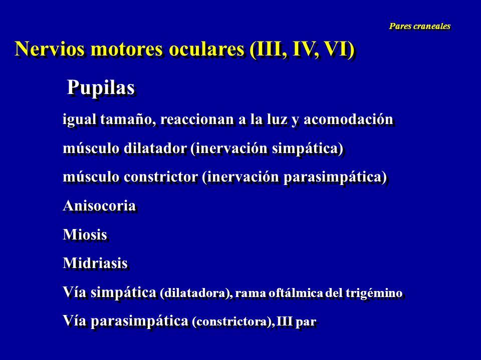 Nervios motores oculares (III, IV, VI)
