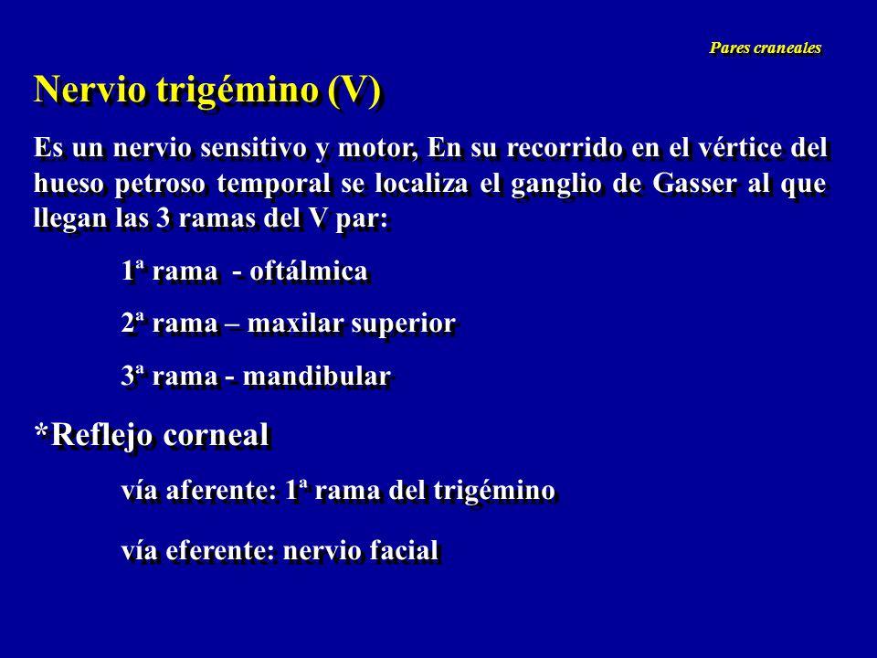 Nervio trigémino (V) *Reflejo corneal