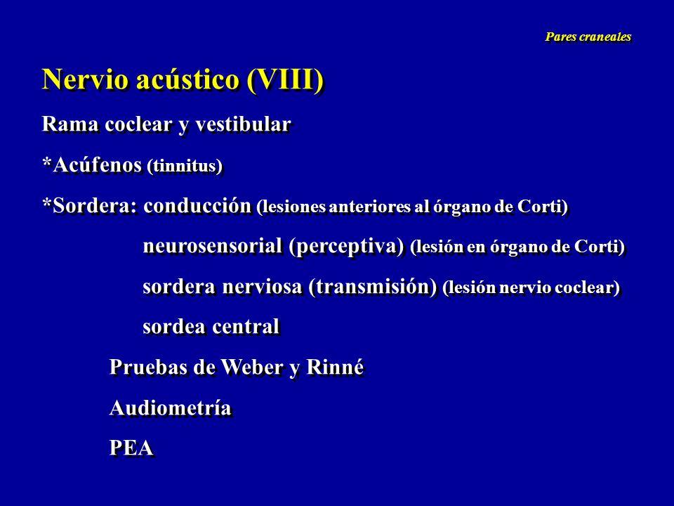 Nervio acústico (VIII)