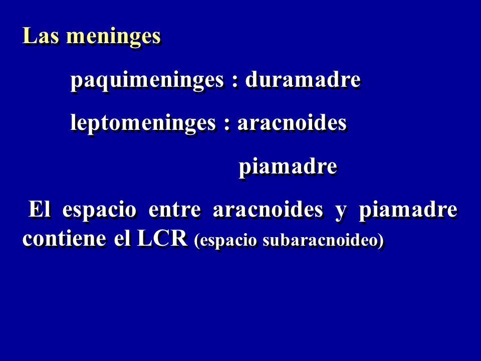 Las meninges paquimeninges : duramadre. leptomeninges : aracnoides. piamadre.