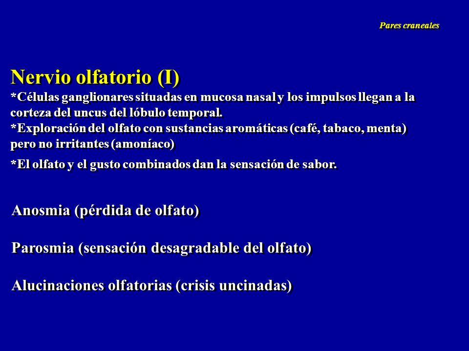 Nervio olfatorio (I) Anosmia (pérdida de olfato)