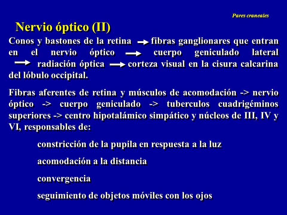 Pares craneales Nervio óptico (II)