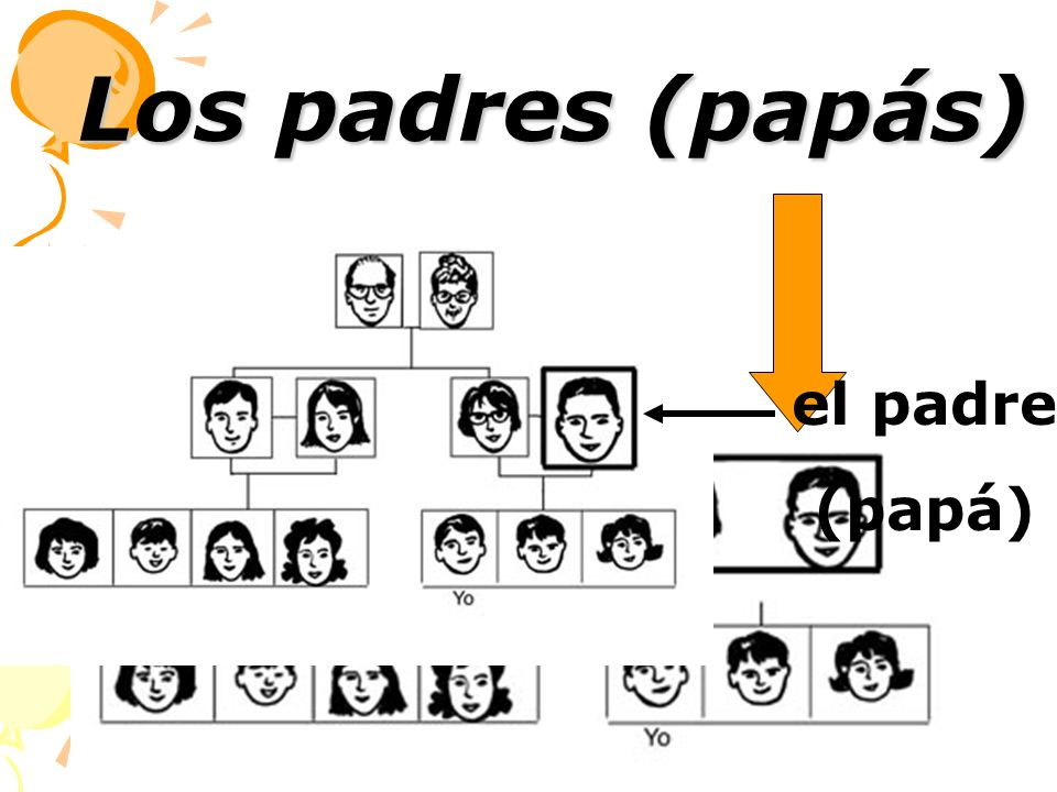 Los padres (papás) el padre (papá)