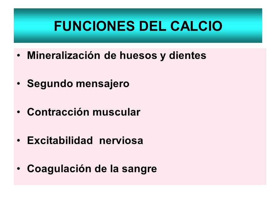 FUNCIONES DEL CALCIO Mineralización de huesos y dientes