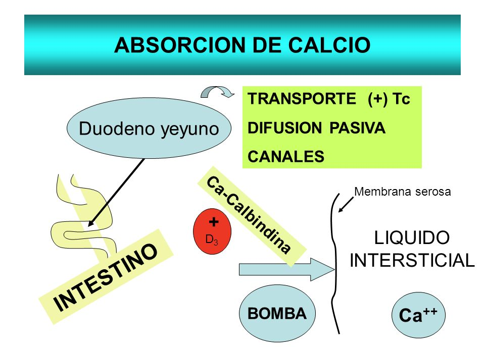 ABSORCION DE CALCIO INTESTINO