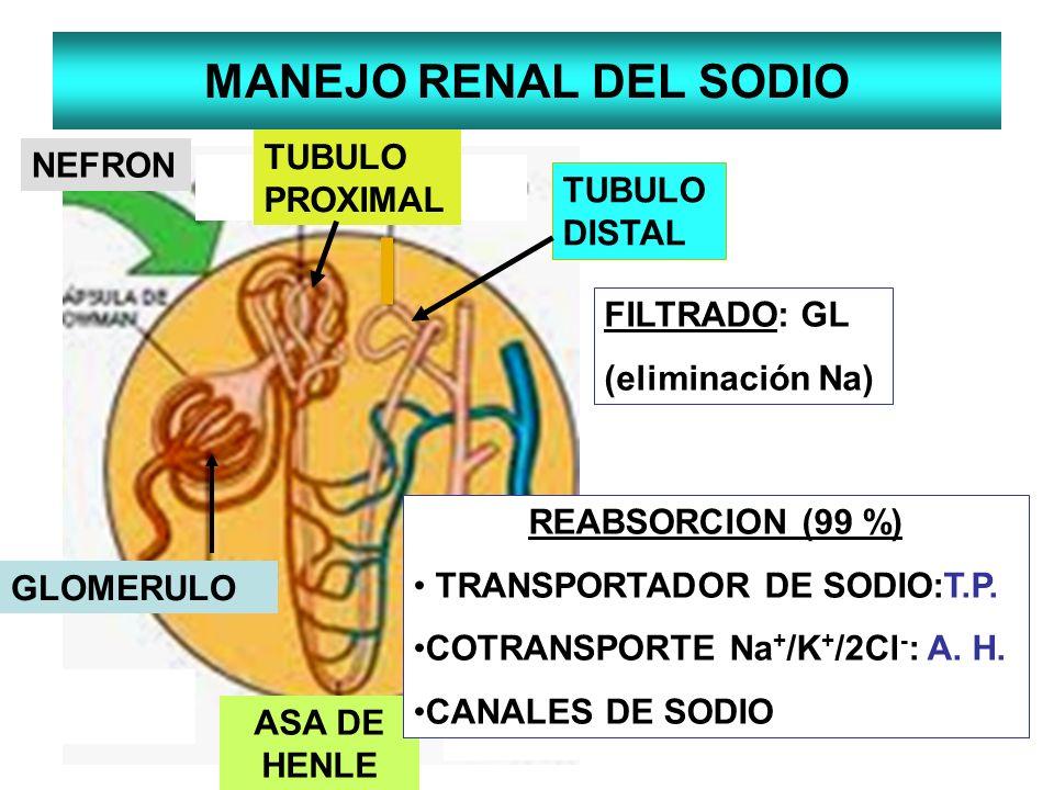 MANEJO RENAL DEL SODIO TUBULO PROXIMAL NEFRON TUBULO DISTAL