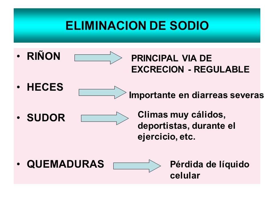 ELIMINACION DE SODIO RIÑON HECES SUDOR QUEMADURAS