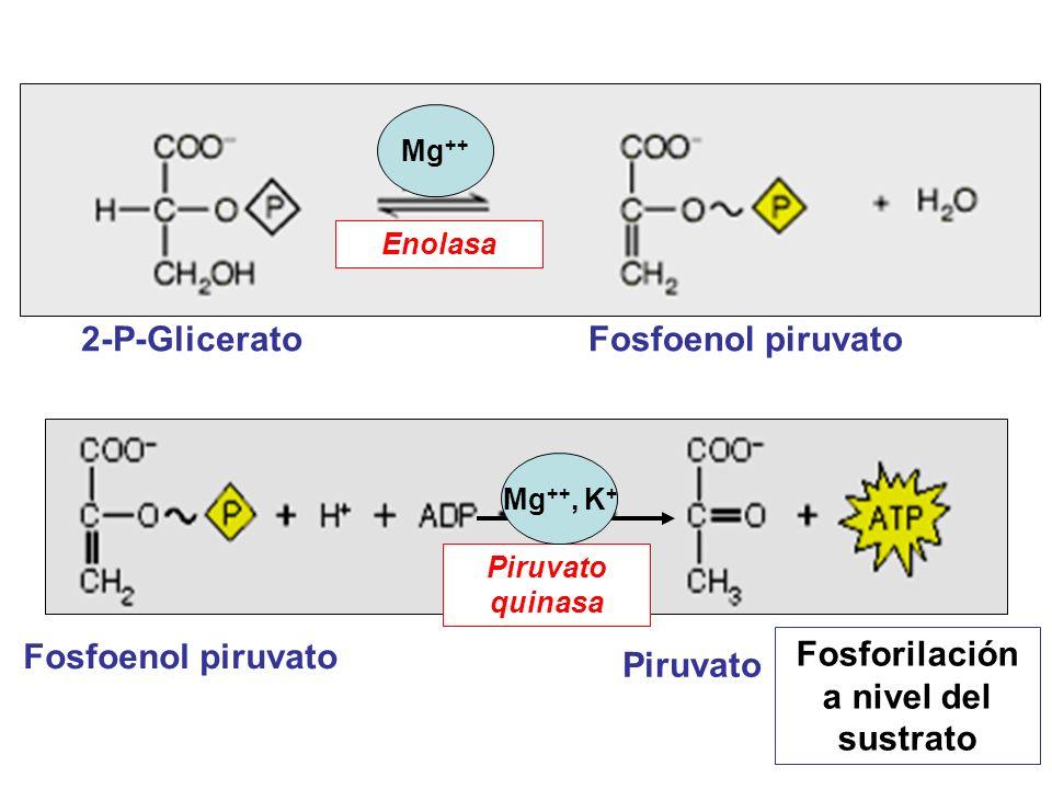 Fosforilación a nivel del sustrato