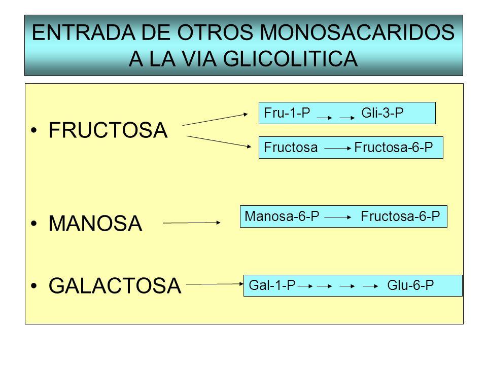 ENTRADA DE OTROS MONOSACARIDOS A LA VIA GLICOLITICA