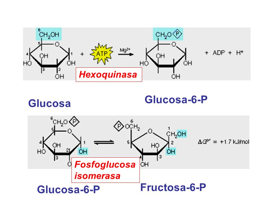 Glucosa-6-P Glucosa Fructosa-6-P Glucosa-6-P Hexoquinasa