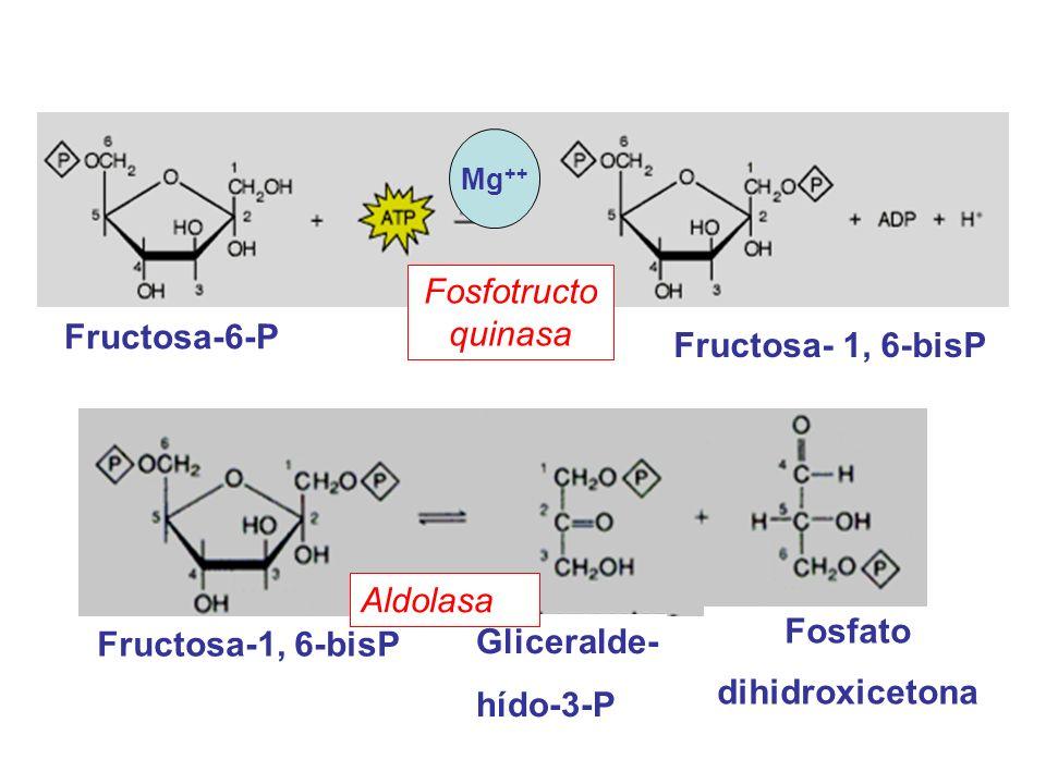 Fosfato dihidroxicetona