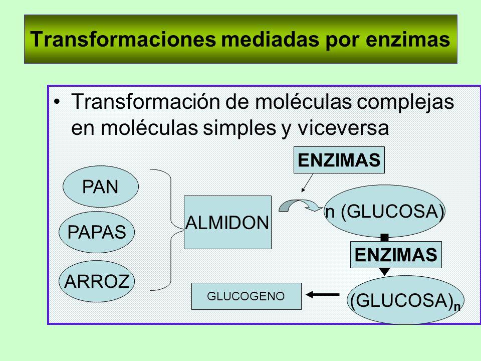Transformaciones mediadas por enzimas