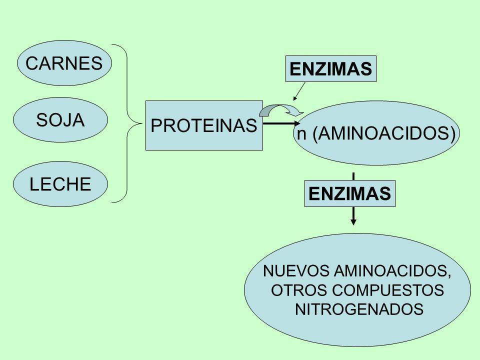 CARNES ENZIMAS SOJA PROTEINAS n (AMINOACIDOS) LECHE ENZIMAS