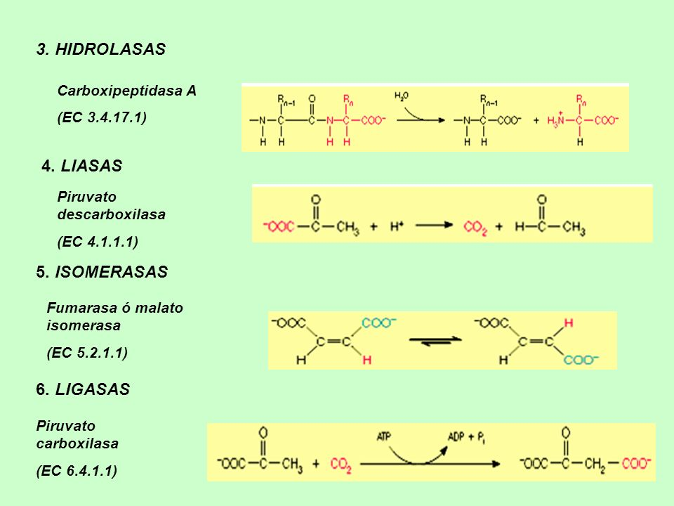 3. HIDROLASAS 4. LIASAS 5. ISOMERASAS 6. LIGASAS Carboxipeptidasa A
