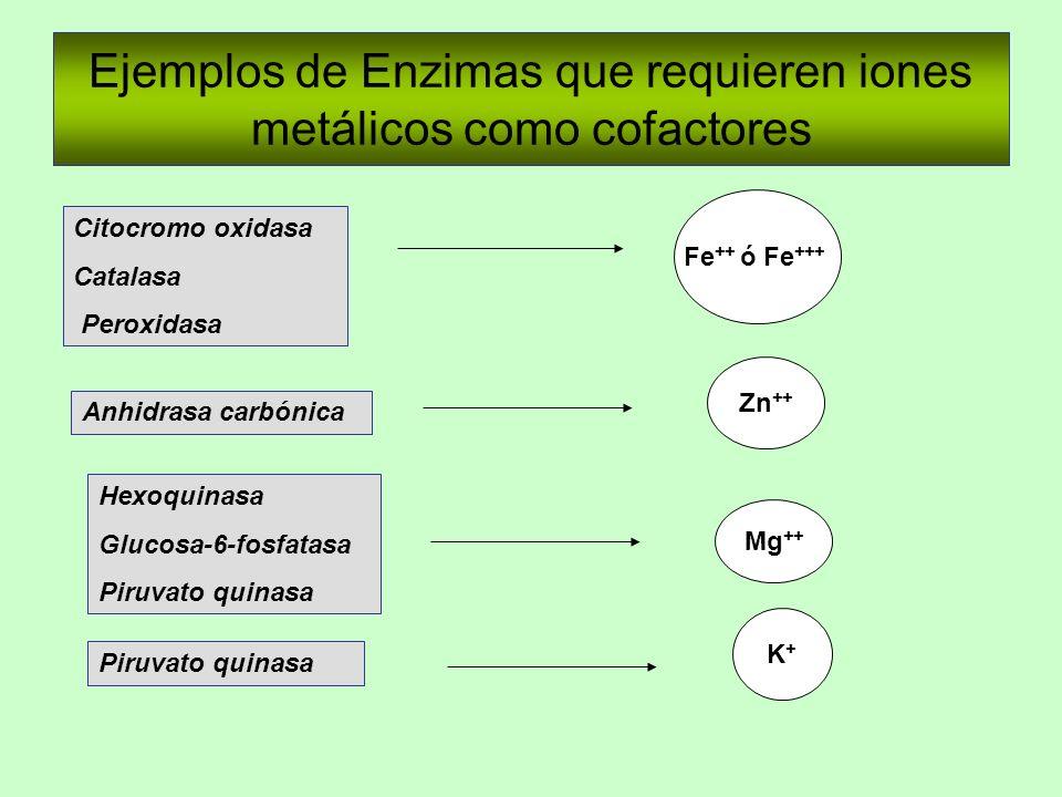 Ejemplos de Enzimas que requieren iones metálicos como cofactores