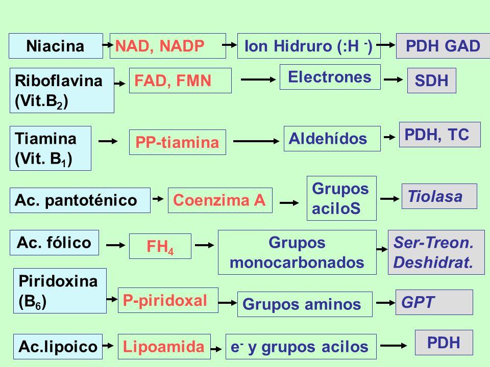 Grupos monocarbonados