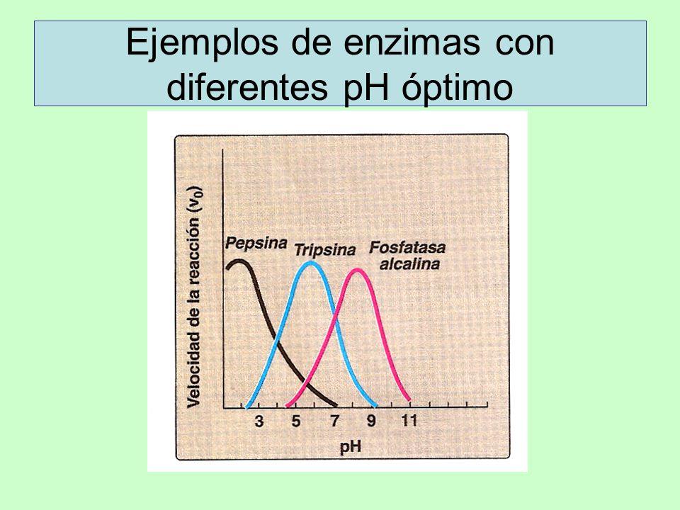 Ejemplos de enzimas con diferentes pH óptimo