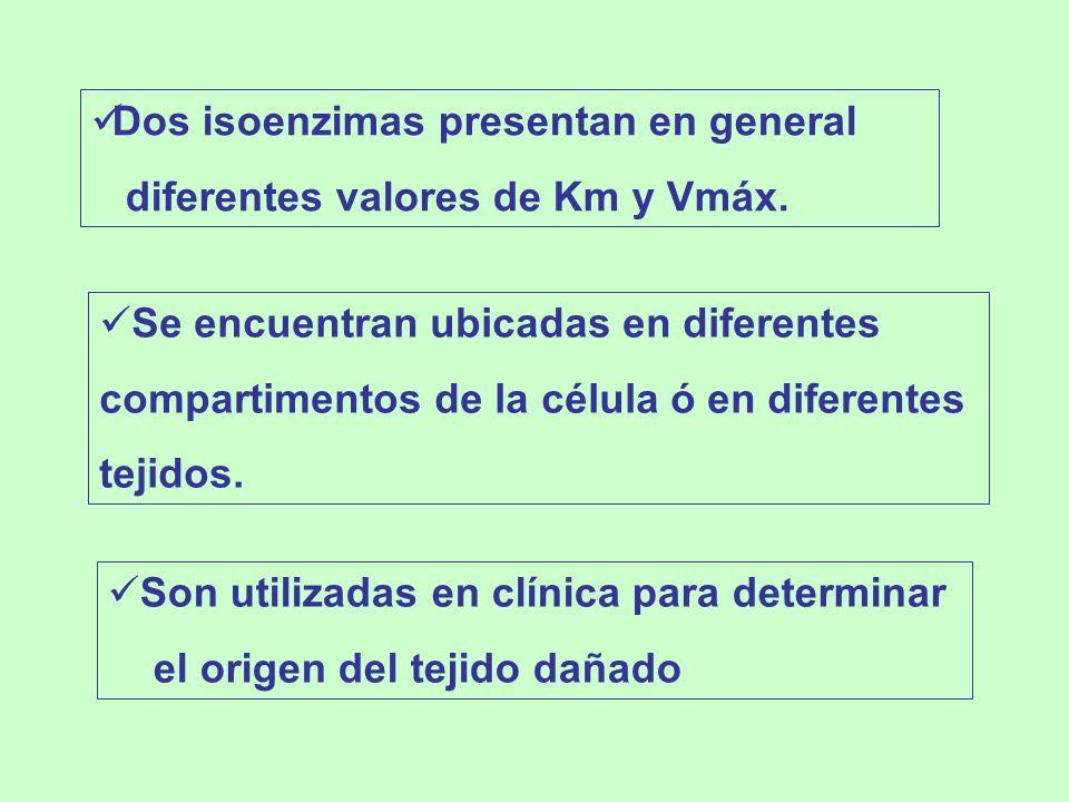 Dos isoenzimas presentan en general