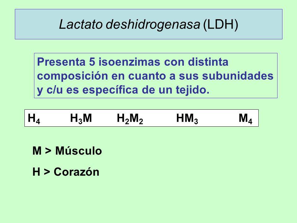 Lactato deshidrogenasa (LDH)
