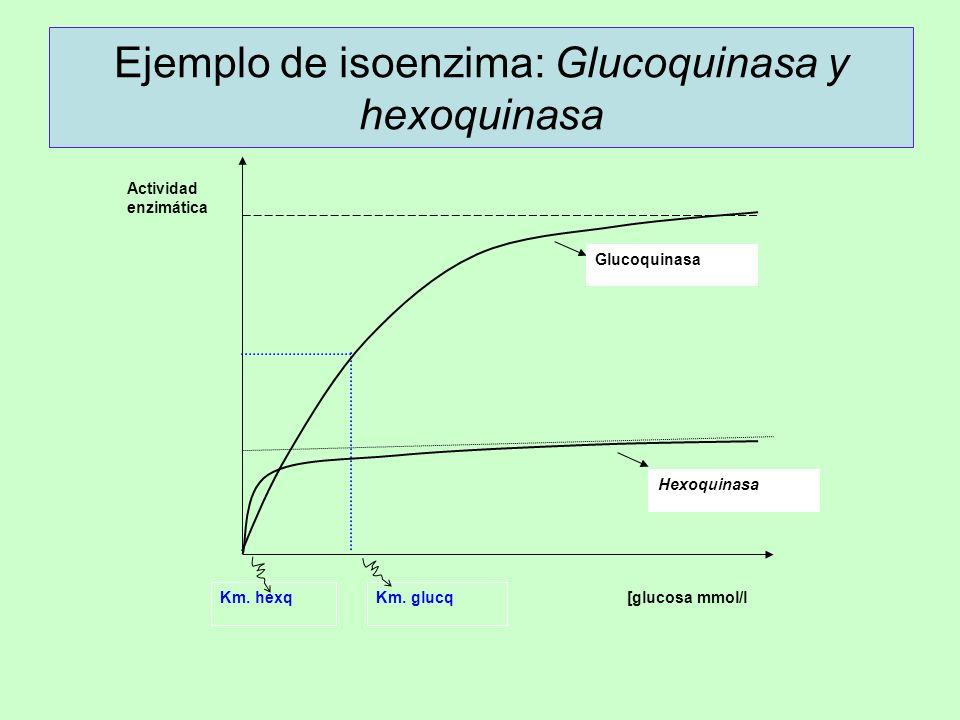 Ejemplo de isoenzima: Glucoquinasa y hexoquinasa