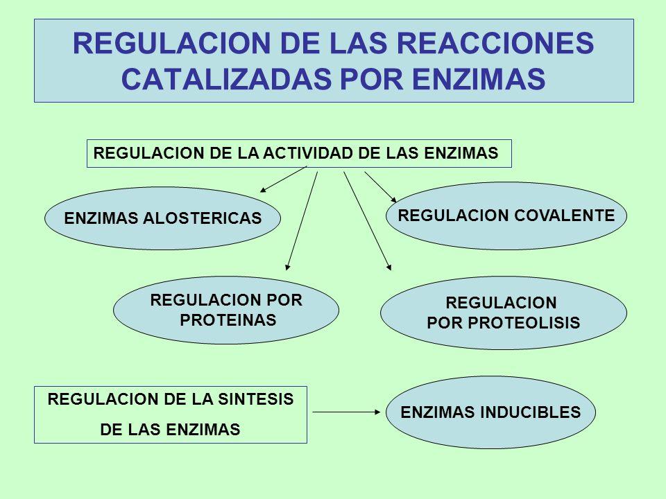 REGULACION DE LAS REACCIONES CATALIZADAS POR ENZIMAS