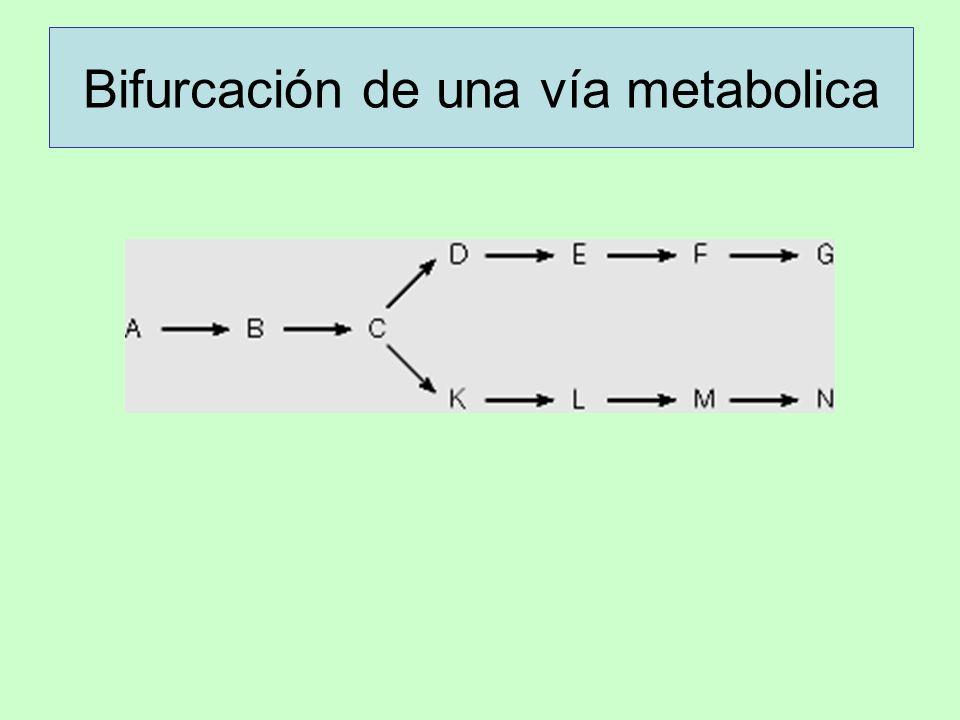 Bifurcación de una vía metabolica