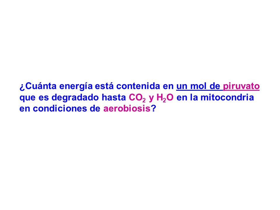 ¿Cuánta energía está contenida en un mol de piruvato que es degradado hasta CO2 y H2O en la mitocondria en condiciones de aerobiosis