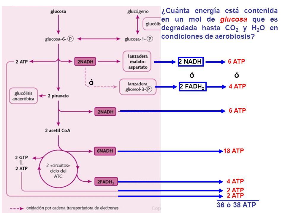 ¿Cuánta energía está contenida en un mol de glucosa que es degradada hasta CO2 y H2O en condiciones de aerobiosis