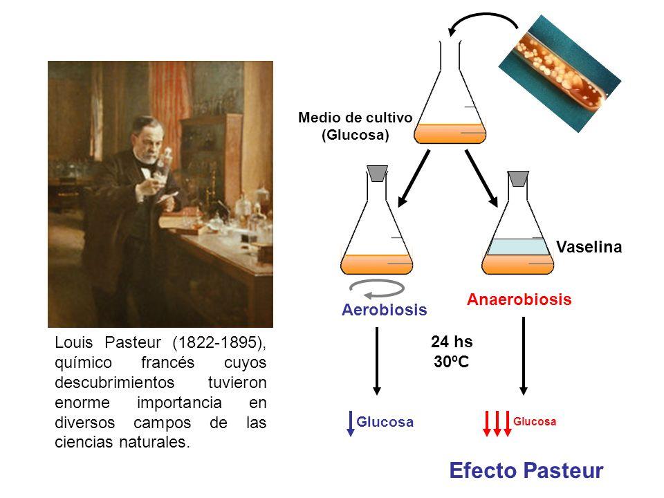 Efecto Pasteur Vaselina Anaerobiosis Aerobiosis