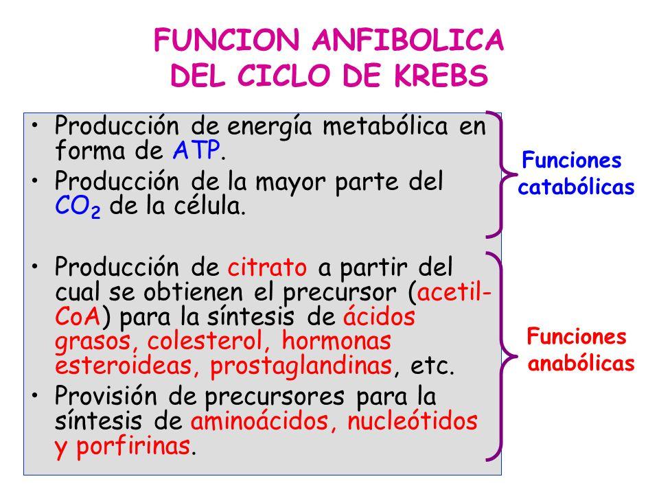 FUNCION ANFIBOLICA DEL CICLO DE KREBS