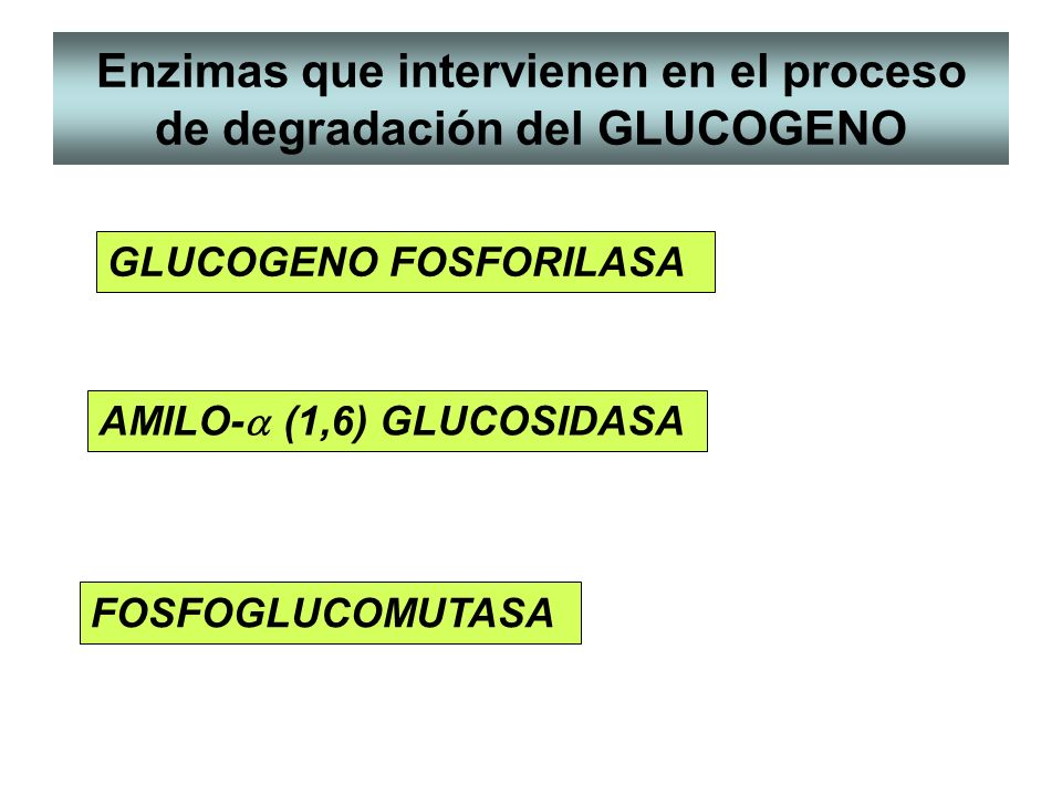 Enzimas que intervienen en el proceso de degradación del GLUCOGENO