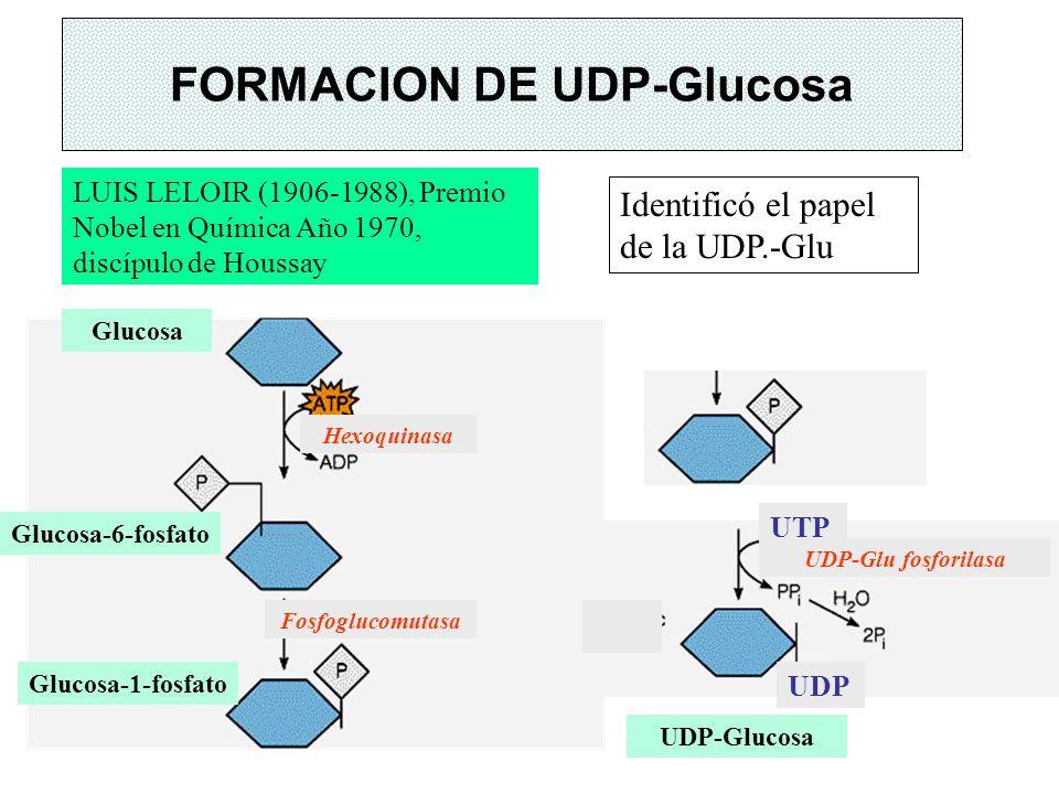FORMACION DE UDP-Glucosa