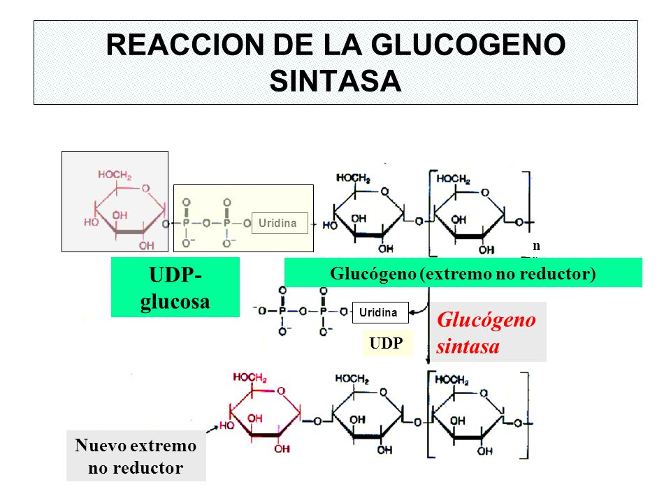 REACCION DE LA GLUCOGENO SINTASA