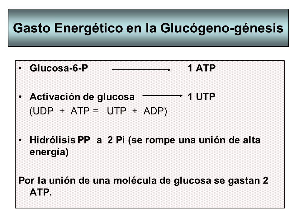 Gasto Energético en la Glucógeno-génesis