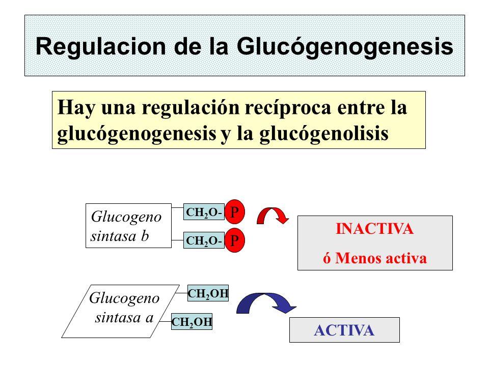 Regulacion de la Glucógenogenesis
