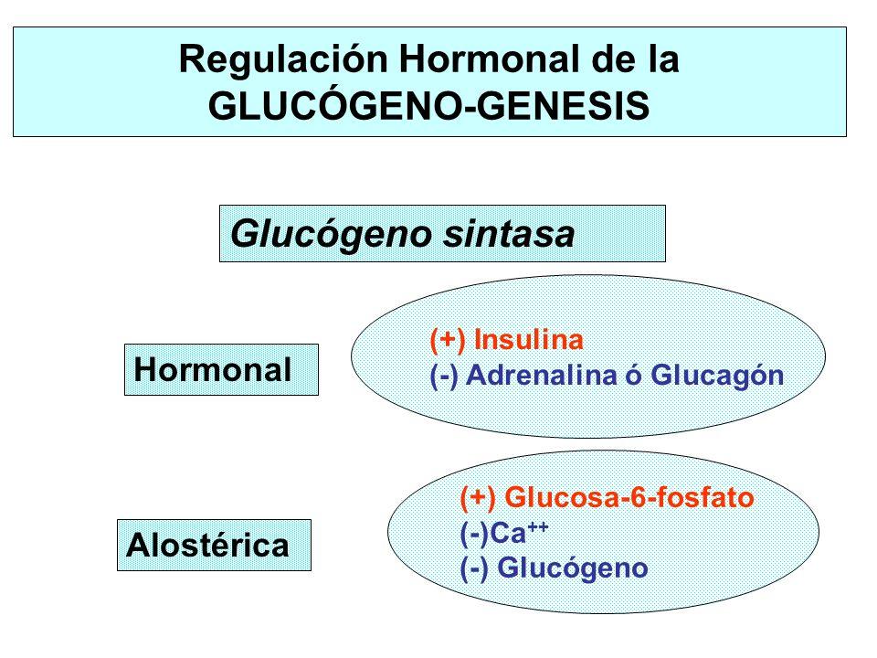 Regulación Hormonal de la GLUCÓGENO-GENESIS