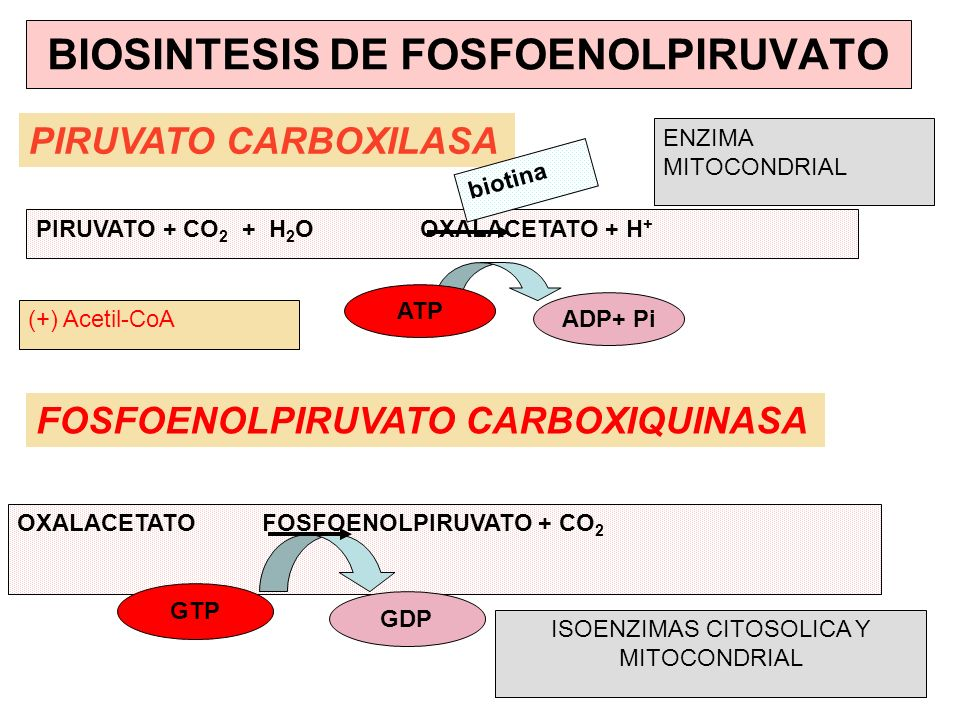 BIOSINTESIS DE FOSFOENOLPIRUVATO