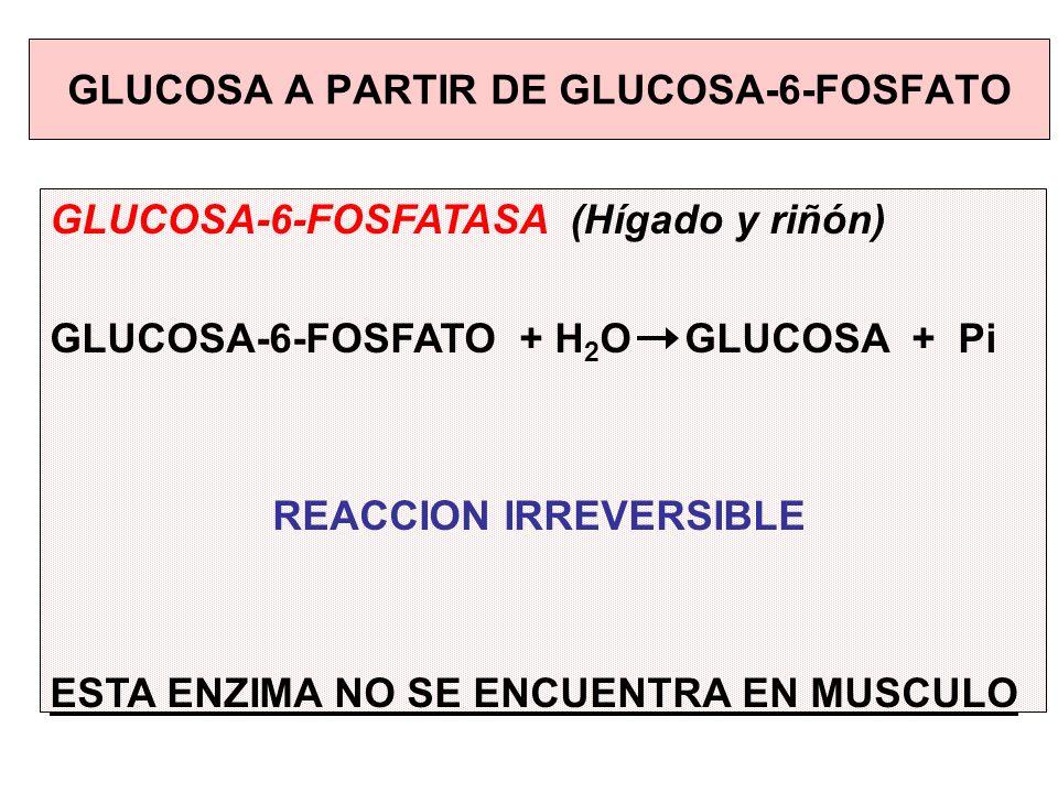 GLUCOSA A PARTIR DE GLUCOSA-6-FOSFATO