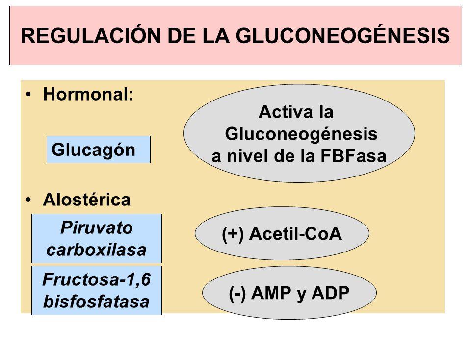 REGULACIÓN DE LA GLUCONEOGÉNESIS