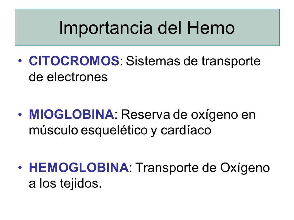 Importancia del Hemo CITOCROMOS: Sistemas de transporte de electrones