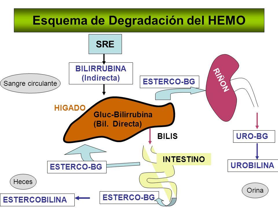Esquema de Degradación del HEMO
