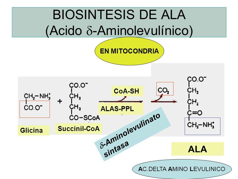 BIOSINTESIS DE ALA (Acido d-Aminolevulínico)